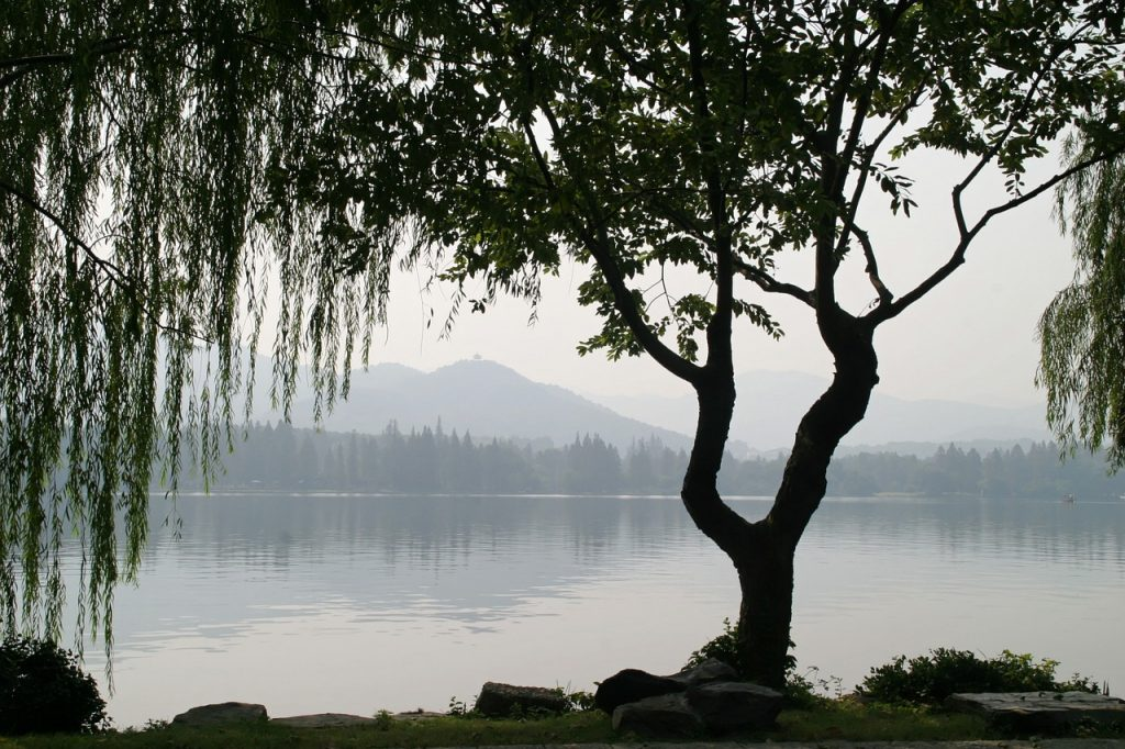 arbre-chinois-lac