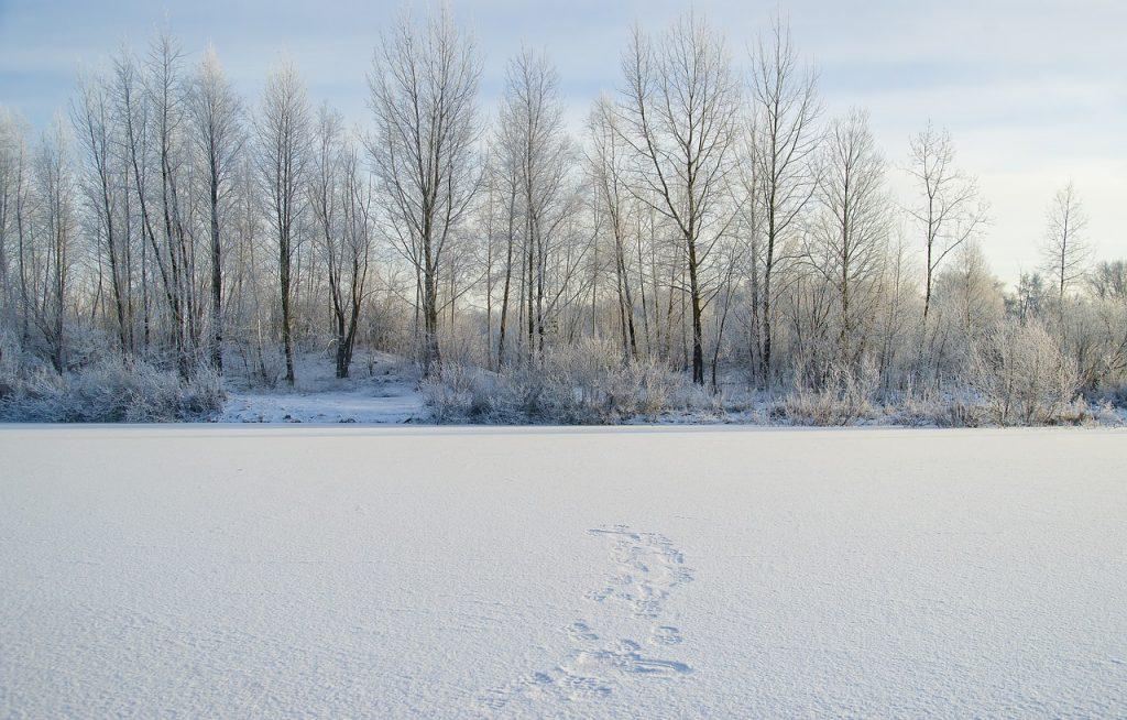 foret-neige-arbre-lac